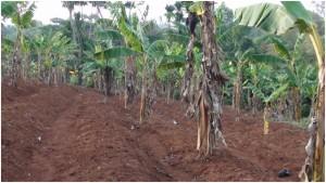 Kameroen project 5